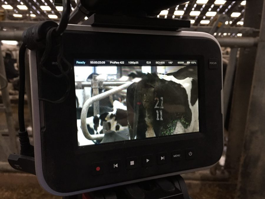 Cow camera
