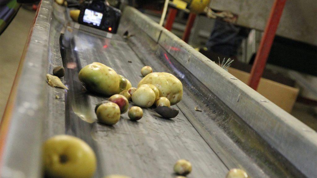 ugly-potato-filming