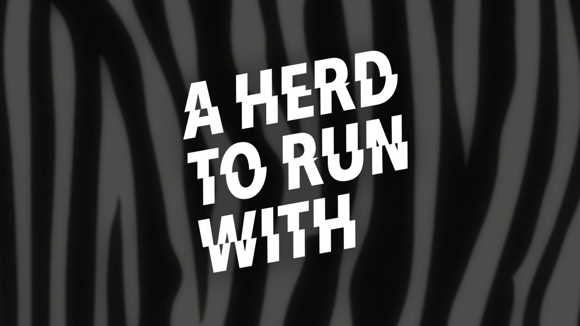 a herd to run with