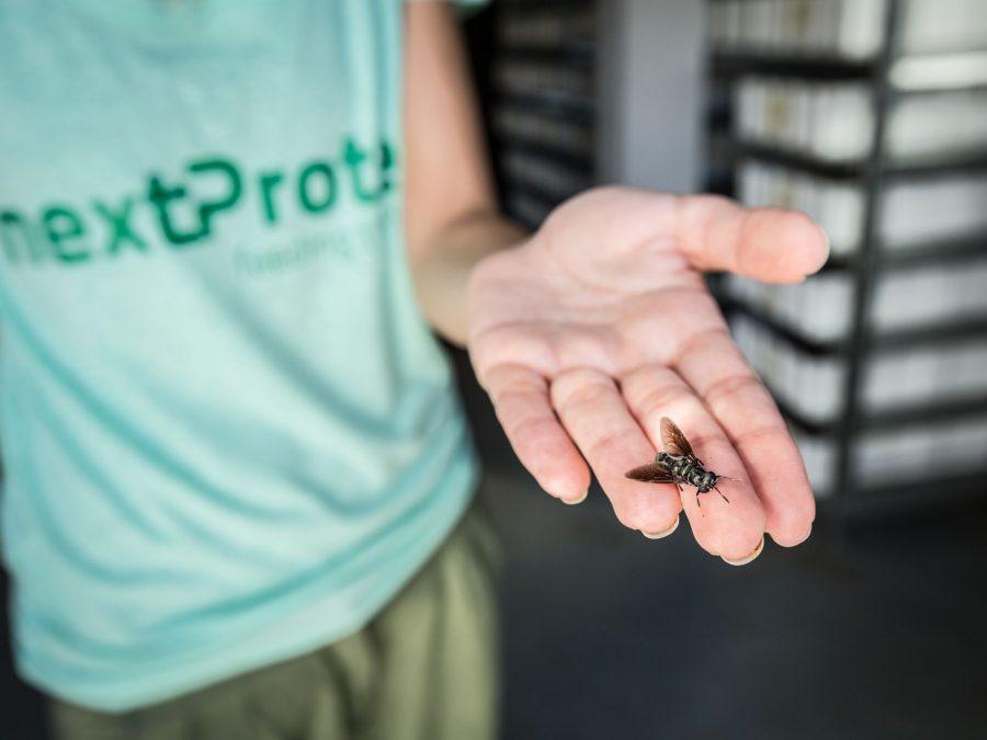 nextProtein agritech startup