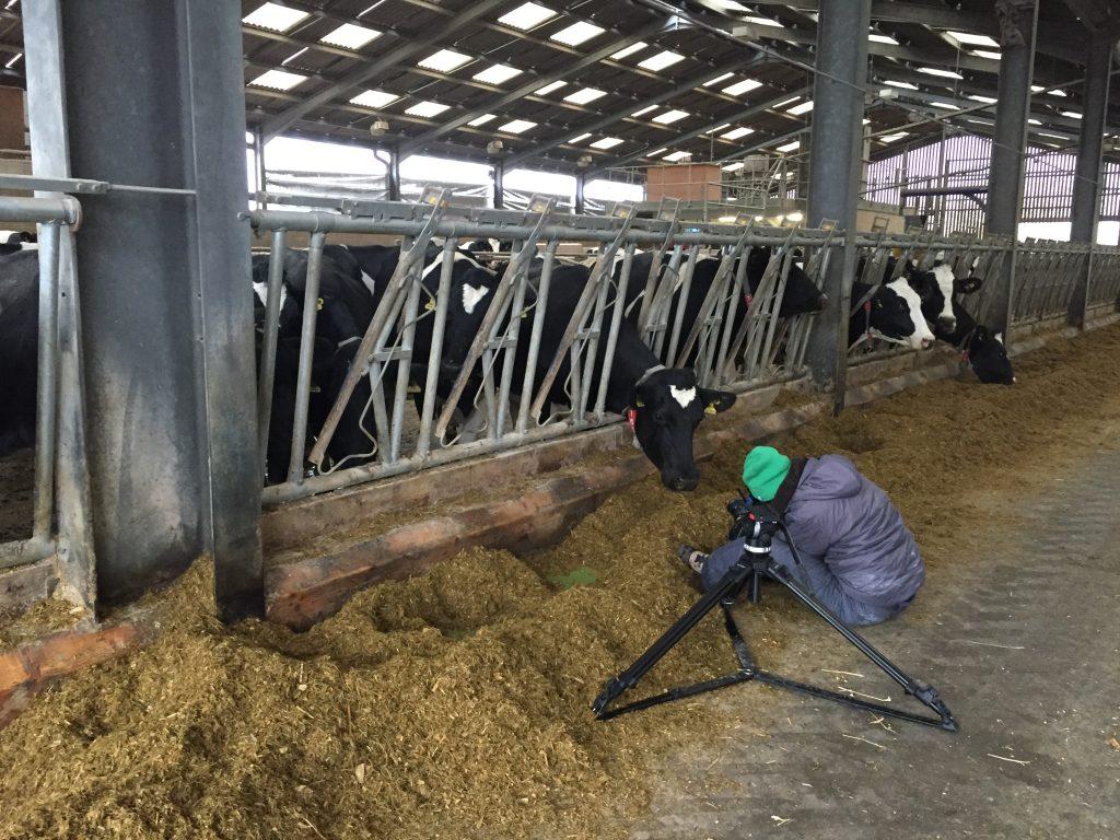 Camera cow